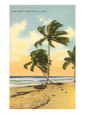 Palm Trees, Miami Beach, Florida Poster