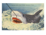 Catching a Shark, Marineland, Florida Posters