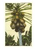 Papaya Tree, Florida Print