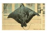 Whip Ray, Miami, Florida Poster