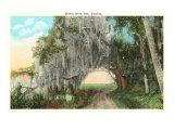 Royal Arch Oak, Florida Poster