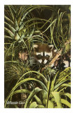 Florida Coon, Pineapples Prints