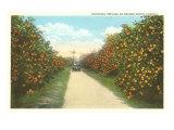 Orange Grove, Florida Poster