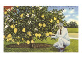 World's Largest Lemons, Florida Posters