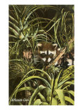 Florida Coon, Pineapples Print