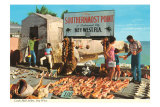 Buying Conch Shells in Key West Poster