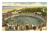 Porpoises Cavoting, Marineland, Florida Posters