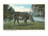 Razorback Hog, Florida Posters
