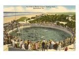 Porpoises Cavoting, Marineland, Florida Posters