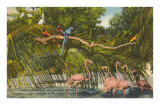 Macaws, Flamingos, Cockatoo, Florida Prints