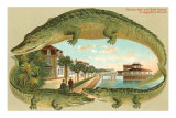 Alligators, Sea Wall, St. Augustine, Florida Prints