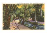 McKee Jungle Gardens, Vero Beach, Florida Posters