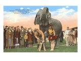 Elephant Getting Manicure, Sarasota, Florida Posters