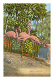 Flamingos, Florida Print