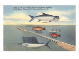 Fish, Bridge, Florida Print
