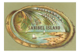 Souvenir from Sanibel Island Photo