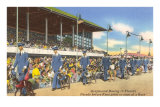 Greyhound Racing, Florida Prints