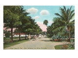 Royal Poinciana, Palm Beach, Florida Posters