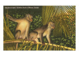 Monkeys, Florida Posters