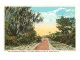 John Anderson Highway, St. Augustine, Florida Print