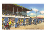 Greyhound Racing, Florida Print