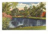 Peacock, Sarasota, Florida Posters