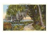 Old Moss Oak, Florida Plakaty