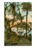 Picnic Oak, St. Petersburg, Florida Plakaty