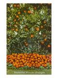Oranges, Florida Posters