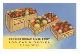 Fruit in Crates, Oak Hill, Florida Posters