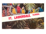 Macaws, Ft. Lauderdale, Florida Posters