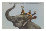 Circus Elephant with Clown, Sarasota, Florida Posters