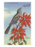 Florida Mocking Bird, Poinsettias Poster