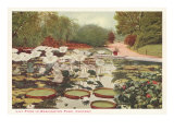 Lily Pond in Washington Park, Chicago, Illinois Posters