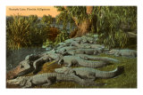Alligators de Floride Posters