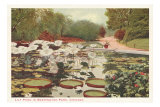Lily Pond in Washington Park, Chicago, Illinois Prints