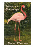 Season Greetings from Florida, Flamingo Posters