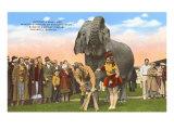 Circus Elephant getting Manicure, Sarasota, Florida Posters