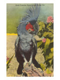 Black Cockatoo, Miami, Florida Print