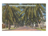 Palm Trees, Key West, Florida Print