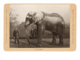 Photo of Jumbo the Elephant Poster