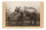 Photo of Jumbo the Elephant Posters
