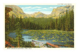 Lily Pond, Wild Basin, Colorado Posters