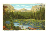 Lily Pond, Wild Basin, Colorado Poster