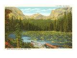 Lily Pond, Wild Basin, Colorado Poster