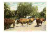 Buffalo Herd, Lincoln Park, Chicago, Illinois Photo