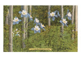 Colorado Columbines and Aspens Print