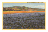 Wildflowers in Spring, California Poster
