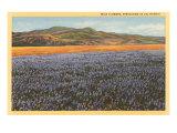 Fleurs des champs au printemps, Californie Affiche