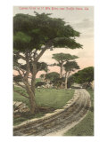 Cypress Trees, Pacific Grove, California Print